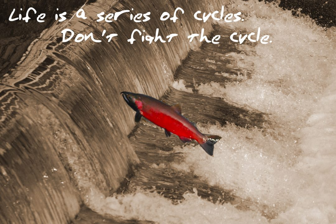 Life Is A Series Of Cycles